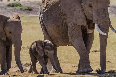 Square herd of elephants
